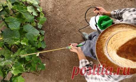 Какой опрыскиватель купить: обзор популярных садовых распылителей | Дела огородные (Огород.ru)