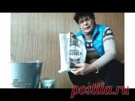 Белить деревья – как, когда и зачем | Дача - впрок