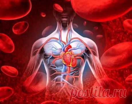 (61) Что вызывает нарушение кровообращения - Народная медицина - медиаплатформа МирТесен