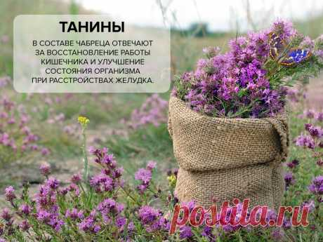 Символ мужества, популярная приправа и самая полезная добавка в чай   Tea.ru - о чае, кофе и не только   Яндекс Дзен