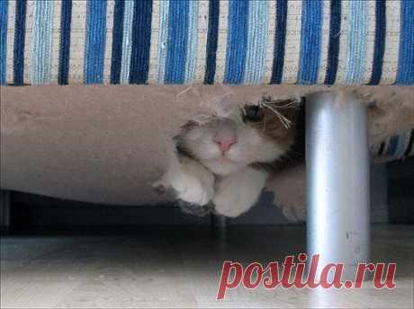 Сегодня я обнаружил гнездо кота под диваном