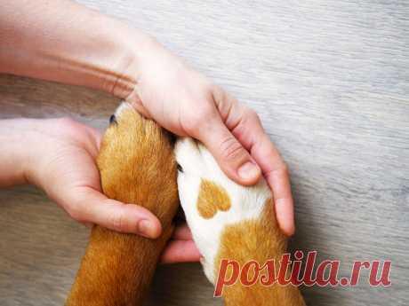 Как правильно почистить лапы собаки после прогулки? | nashi-pitomcy.ru
