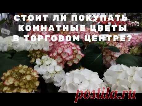 Садовые цветы: Стоит ли покупать  комнатные цветы в торговом центре?