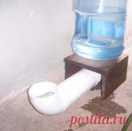Cómo hacer un dispensador de agua para mascotas - Paperblog