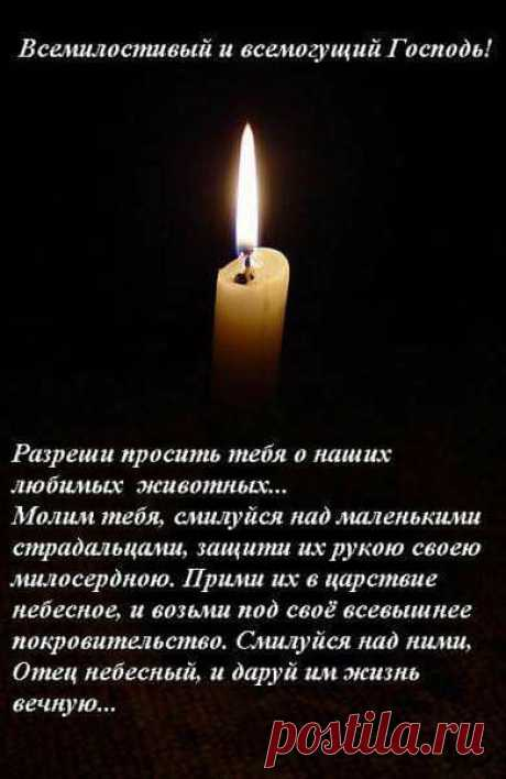 (16) Petrosyan Viktoriya добавила новое фото. - Petrosyan Viktoriya