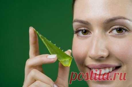 Знаете ли Вы, что сок алоэ хорошо очищает кожу лица и обладает омолаживающим эффектом?  Целебные свойства алоэ были известны еще более 3 тыс. лет назад. В переводе с арабского слово «алоэ» означает «горький», и действительно сок данного растения имеет горький привкус.  Из алоэ можно приготовить маску для любого типа кожи: Показать полностью…