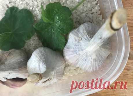 Чеснок у меня теперь хранится до лета – делюсь, какие 3 ингредиента помогают | Зелёные истории | Яндекс Дзен