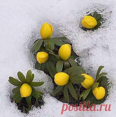 Цветы на снегу