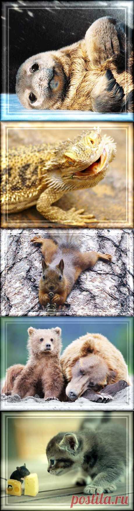 Животные... они очаровательны..