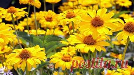Все о выращивании рассады популярных однолетних цветов | Летники (Огород.ru)