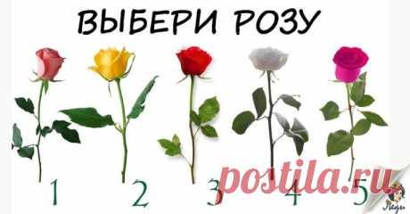 Роза, которую вы выбрали расскажет сбудется ли желание Перед вами пять роз, загадайте желание и выберите одну из них.    Пусть это будет случайный выбор, или просто роза, которая Вам понравилась. Каждая роза характеризует Вас и сообщает, когда сбудется Ва…