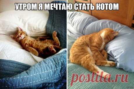 Утром я метаю стать котом — Убойный юмор