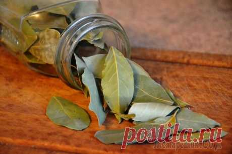 Bay leaf In kitchen of the good hostess will always be in recipes of traditional medicine bay leaf. This overseas spice which homeland are subtropics is so popular in our country that we by right can call it the. Only...