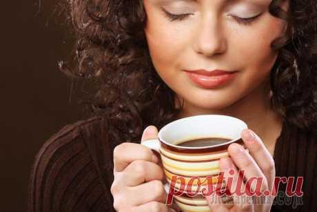 La achicoria – la bebida para una alimentación sana