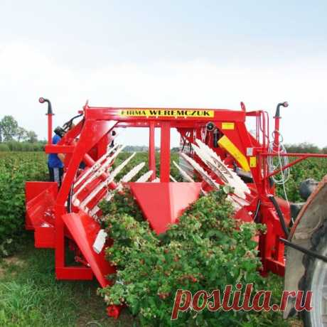 Машина для уборки урожая малины без подпор NATALIA-V, ягодоуборочный навесной комбайн для сбора малины купить в Беларуси
