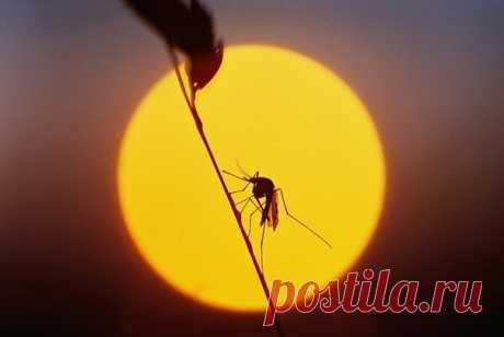 20 августа отмечается Всемирный день комара. Эта дата призвана напомнить об угрозе малярии и других болезней, которые переносятся одним из самых смертельно опасных существ в мире. В честь этого – наша подборка интересных фактов о комарах и борьбе с ними. 1) Наука против вампиров: bit.ly/sciencevsvampires 2) Как комар пьет кровь: видео. bit.ly/bloodsucking 3) Неправильные комары охотятся на своих сородичей: bit.ly/wrongvampires. 4) Почему капли дождя не убивают комаров: bit.ly/surviveraindrops…