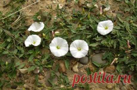 Чем прикрыть почву, чтобы не росли сорняки? | Огород | Дача | Аргументы и Факты