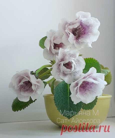 Как меняется цветение одного сорта глоксинии в жаре и прохладе - смотрите сами! 😉