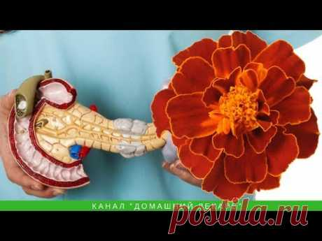 Бархатцы при панкреатите и диабете II для поджелудочной железы - Домашний лекарь - выпуск №129 - YouTube