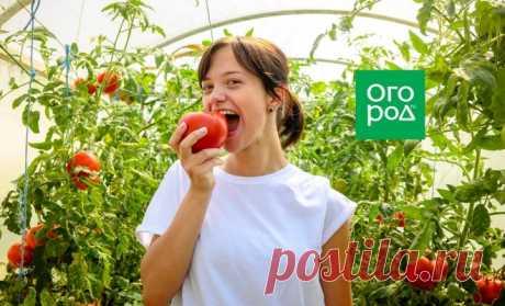 Почему тепличные помидоры несладкие и как это исправить | На грядке (Огород.ru)