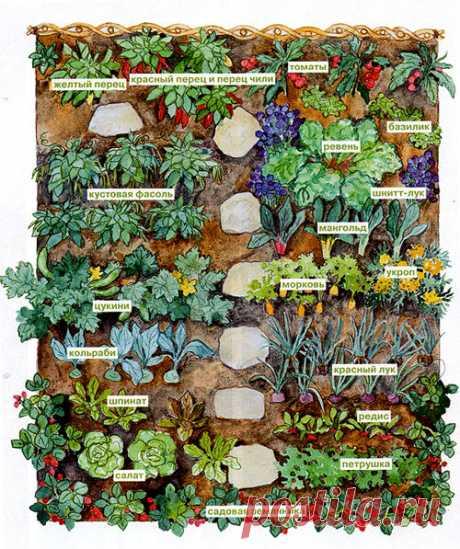 Планировка маленького огорода — план посадок овощей на небольшом участке