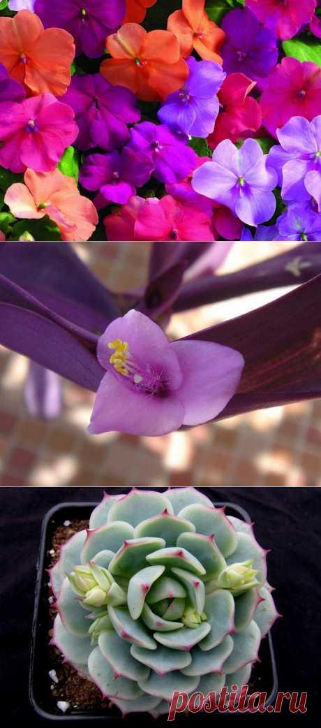 10 наиболее подходящих растений для выращивания в подвесных горшках : НОВОСТИ В ФОТОГРАФИЯХ