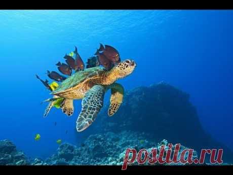 Большое путешествие вглубь океанов 3D: Возвращение