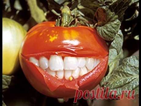 (ГМО) Генномодифицированные продукты