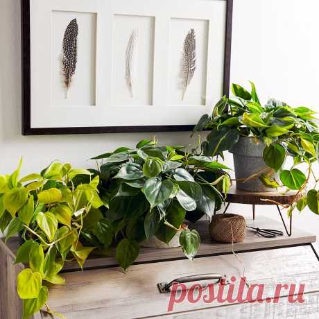 Комнатные Растения для Слабого Света   Лучшие Дома и Сады