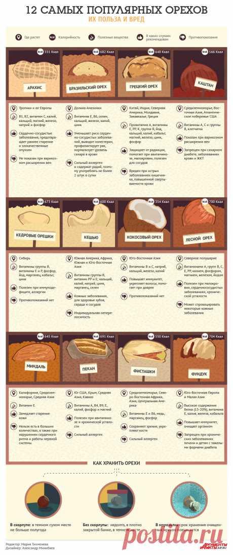 12 самых популярных орехов: их польза и вред. Инфографика | Продукты и напитки | Кухня | Аргументы и Факты
