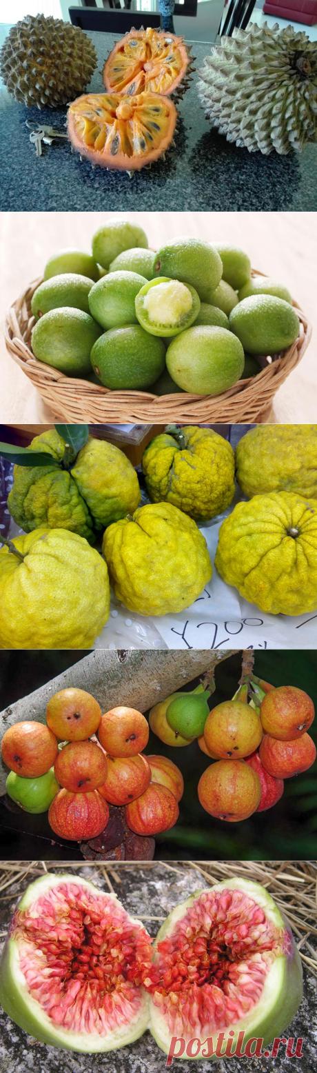 Необыкновенные фрукты со всего мира (часть 16)