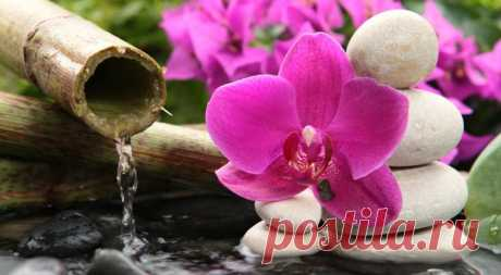 Семена орхидеи: секреты проращивания, как вырастить орхидею в домашних условиях Чем вызваны трудности выращивания Семена растений семейства орхидных никогда не прорастают в привычных для большинства растений условиях – вместо земли им нужен питательный субстрат. Причиной тому ста...