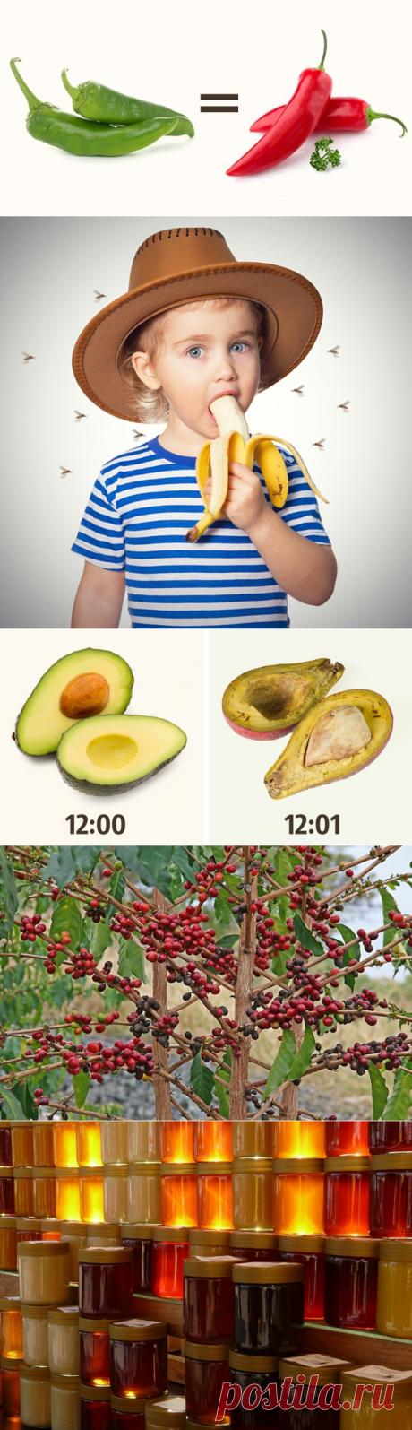 13 тайн и загадок о еде — Наука и жизнь