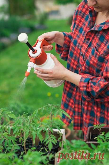7 народных метода борьбы с фитофторозом помидор — 6 соток