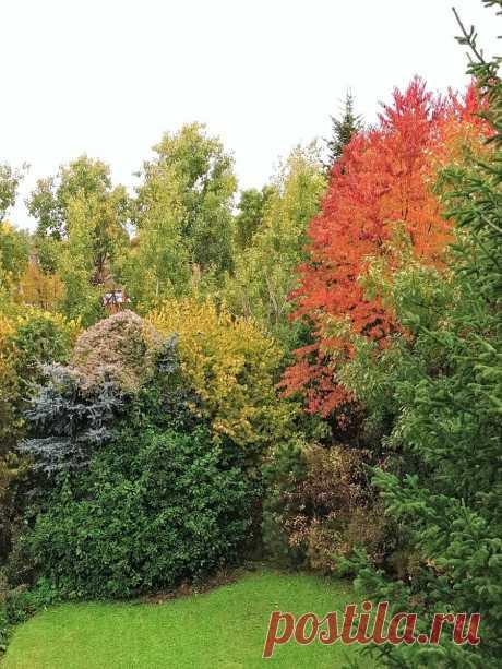 Мой октябрьский чек-лист: что надо и не надо делать в саду | Сад Анны Гауэр | Яндекс Дзен