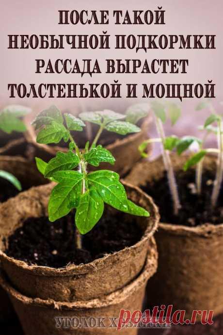 Для того чтобы рассада могла сначала нарастить корневую систему, а потом уже развить полноценные стебель и листья, используют питательные вещества, которые вносят в тот слой почвы, где находятся корни.