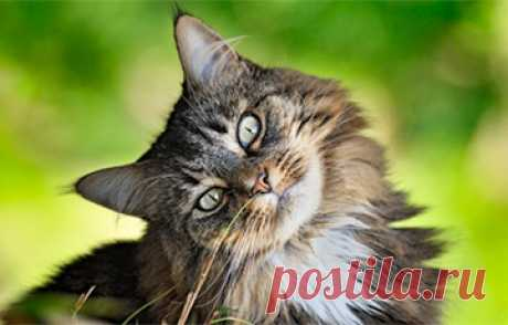 Scientists opened the most interesting riddle of cats | Oh, damn Why cats always land on four paws. Initially experts were interested in a question as a cat understands in what party she should turn over. As it appeared, well developed vestibular mechanism is responsible for it. The nature created at them in an inner ear a receptor which allows cats to learn in what situation they are concerning the earth, writes newsyou.info. Scientists looked how a feather...