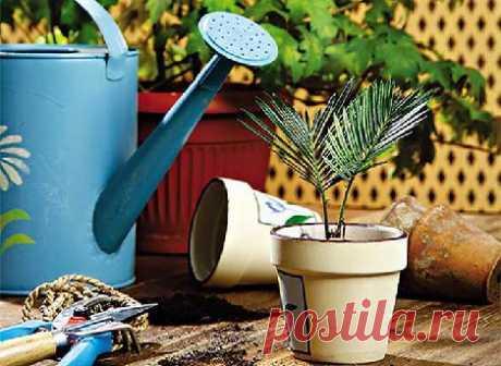 10 золотых правил при уходе за комнатными растениями. — Полезные советы