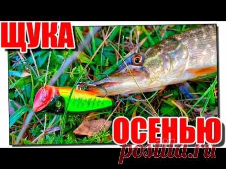 Рыбалка на щуку в середине осени!