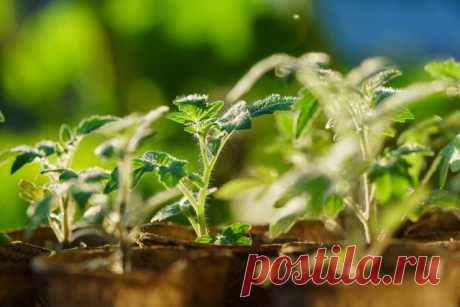 14 reglas, que debéis observar a la cultivación de las plantas en las condiciones de casa - Sadovodka