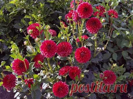 Уход в сентябре за цветами: посадка, пересадка, подкормка, полив и обрезка