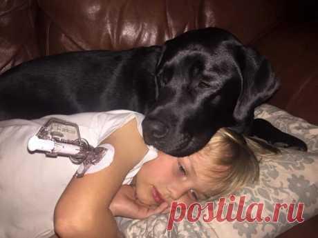 Собака будит ее посреди ночи. Увидев своего сына, она ужаснулась Понравилась история? Жмите лайк