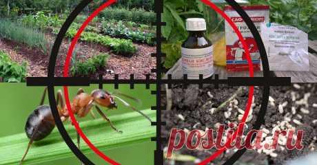 Как забыть о муравьях на даче навсегда! | Красивый Дом и Сад