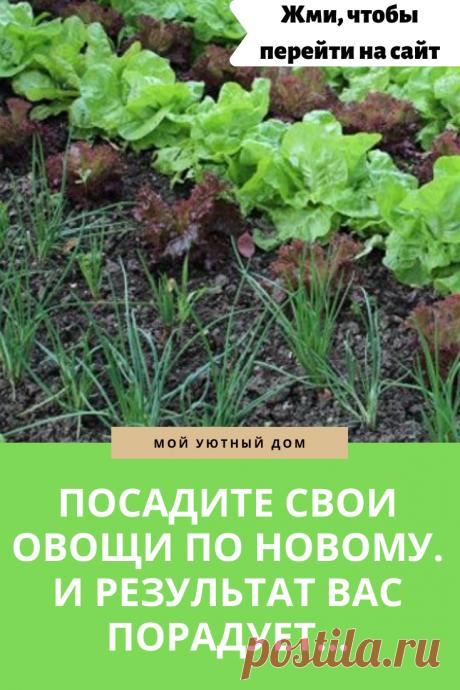 Совет как правильно посадить овощи в огороде
