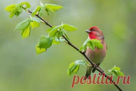 Ранним утром птица-чечевица осматривает окрестности. А Наталия Сытина (nat-geo.ru/community/user/115889/) её фотографирует. Отличного летнего дня вам!