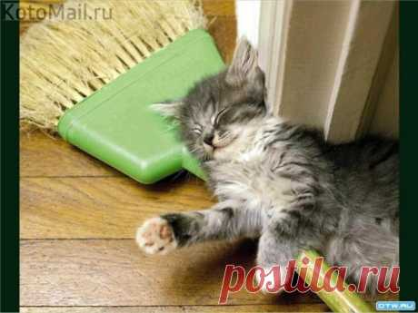 Уборка во сне