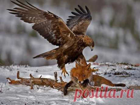 Животные | Фотографии Доктор Шклов • КМ-проект иНаЧе | 1290 фото