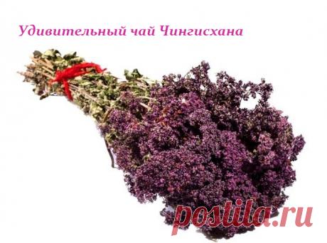 УДИВИТЕЛЬНЫЙ ЧАЙ ЧИНГИСХАНА.