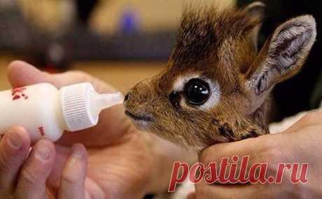 Детёныш жирафа. Милый, правда?