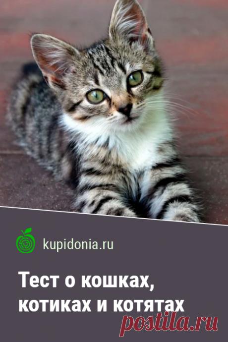 Тест о кошках, котиках и котятах. Развлекательно-познавательный тест о домашних кошках. Проверьте свои знания!